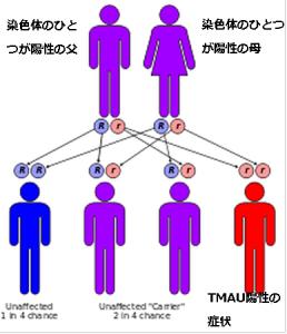 染色体TMAU